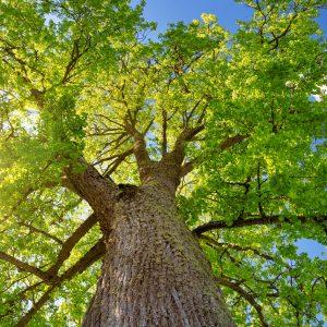 portland homes value trees
