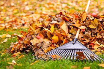 fall lawn care portland