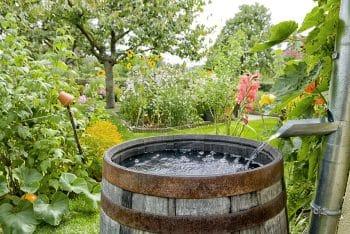 portland rain barrel garden