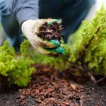 10 Landscaping Tips to Increase Home Value in 2021