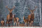 Portland Real Estate Wildlife