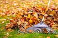 Portland Fall Lawn Care and Staging Guide